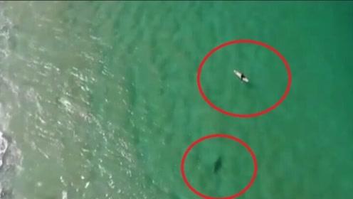 """男子在海上冲浪,空中传来一声""""快跑"""",回头一看连忙逃离"""