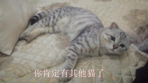 主人只顾着看电视,忽视了一旁的小猫咪,猫:你肯定有其他猫了