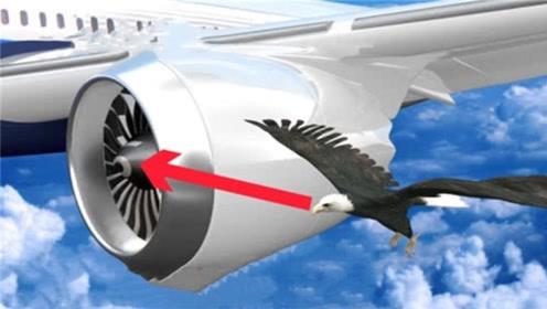 正在飞行的飞机被鸟撞上,后果有多严重?看完被惊到了