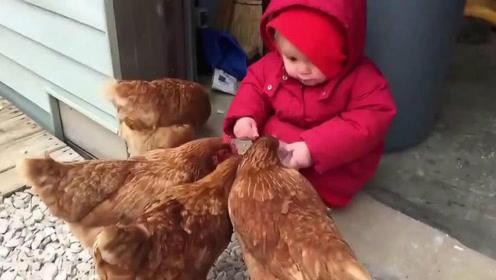宝宝正在喂鸡吃饭,突然意外发生,下一秒千万忍住别笑