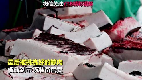 日本组织小学生观看杀鲸鱼