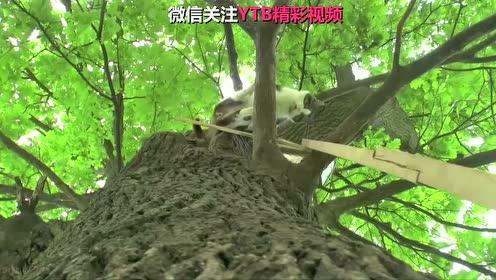 波兰东北部某小镇,有一只常年待在树上的小猫