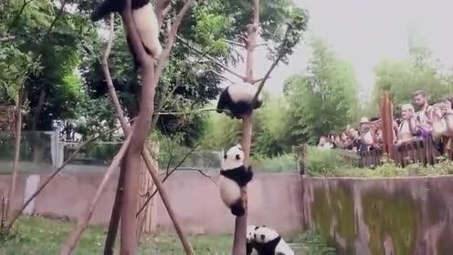 熊猫:你给我下来!想上去得过本熊这一关
