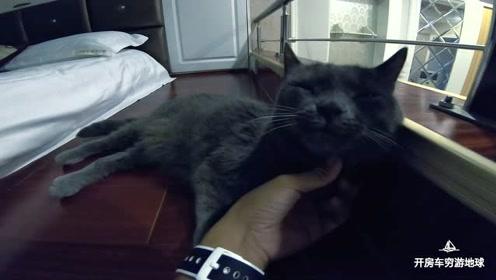 搬家700km,小哥折腾小猫咪两天,终于住进小洋楼,累到瘫!