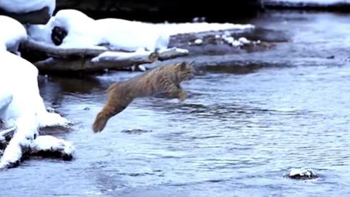 男子河边上遇到一个高手,原地起跳,跳过5米宽的河!