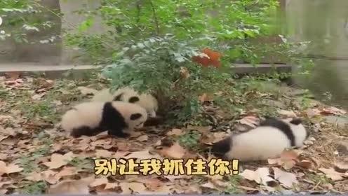 走地兽最近很膨胀,熊猫:还敢来小爷我的地盘,我揍你不用问几级