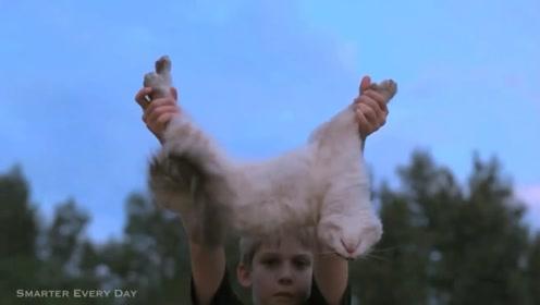 为什么说猫有九条命?老外用150只猫实验,结果意想不到