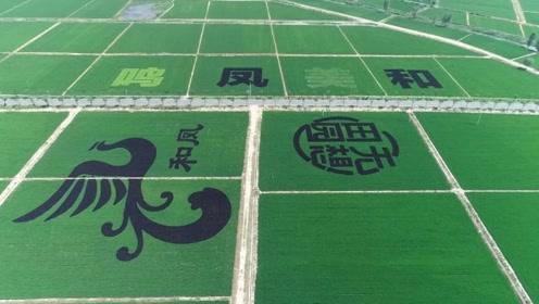 """凤栖山下""""和美凤鸣"""",机电产业小镇迅速崛起"""