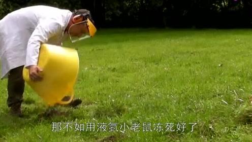 老外将10斤液氮倒入老鼠洞,3秒后听见砰一声,老鼠内心崩溃!