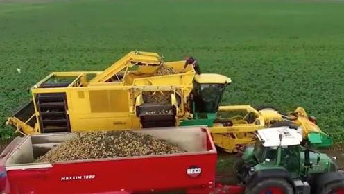 美国农场主是如何收土豆的?全自动机械化,一天轻松能收上百亩