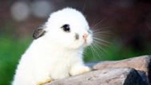 """生肖兔在哪几个月出生,是天生的""""富贵命"""",注定衣食无忧!"""