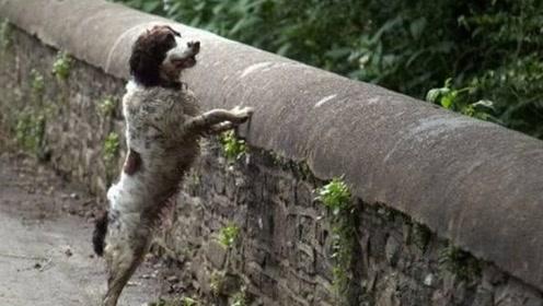 """英国神秘的""""鬼桥"""",600多条狗跳桥自杀,专家在桥下找到真凶"""