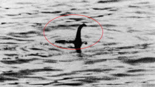 """尼斯湖发现神秘""""身影""""?摄像机放大100倍,看到惊人一幕!"""