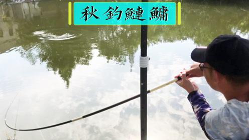 实战!秋钓鲢鳙,曹鲢长用大弯弓祝钓友和祖国满满的幸福!
