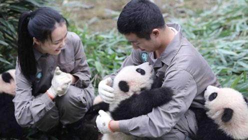 日本女子3岁爱上大熊猫,立志要当饲养员,苦练中文最终如愿以偿