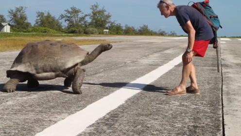 巨龟正在约会,老人故意上前挑逗,结果被巨龟追着打