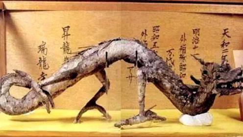 """日本瑞龙寺的""""真龙""""是真的吗?为何不用DNA鉴定真假?"""
