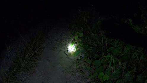 夜晚路上遇到2条蛇,身上颜色一节白一节黑,你知道是什么蛇吗?