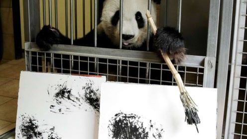 大熊猫在国外挥毫泼墨,一幅画卖出数千元,网友:真不愧是国宝