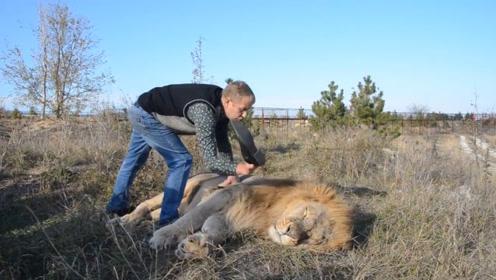 摸虎屁股还与虎搏斗,老外终于将魔爪伸向狮子,操起鞋子一顿招呼