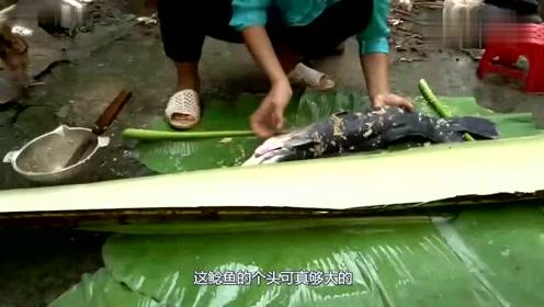 荒野生存,妹子用树皮包裹巨型鲶鱼烤着吃,鲜美,涨见识了