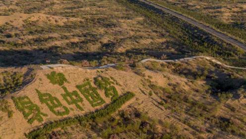 你在支付宝种的树如今怎样了,中国用30年将沙漠变绿洲,或将被毁