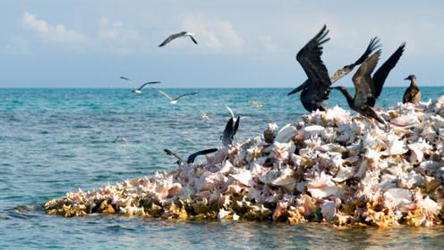 想骗我去吃海螺!数百万海螺壳建造的岛屿,从童话世界里飘出来
