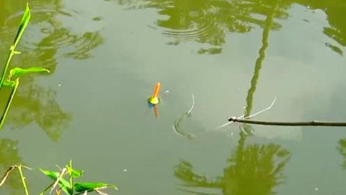 在鱼塘里钓鱼,能解瘾吗?