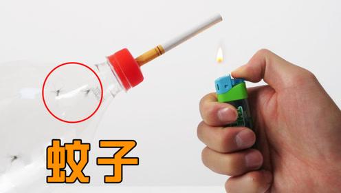 给蚊子抽一支烟会如何?看完你还敢吸烟吗?