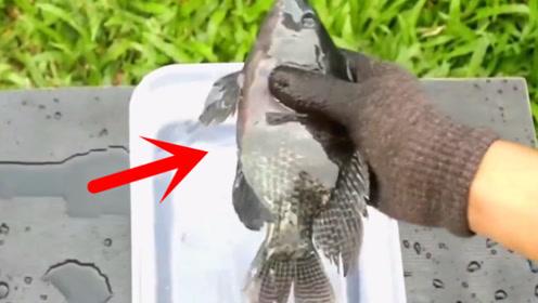 被液氮冻成冰棍的活鱼,老外又放回水中后,才是不可思议的开始!