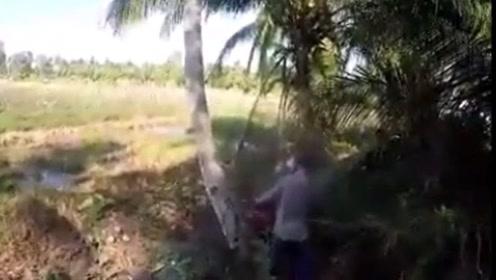 男子锯倒了大树正准备离开 却惨遭这棵树报复
