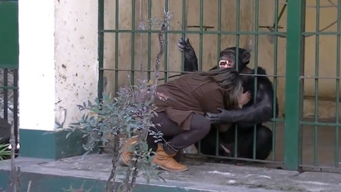 猩猩与女子5年后重逢,隔笼相拥,猩猩的情绪一度失控!