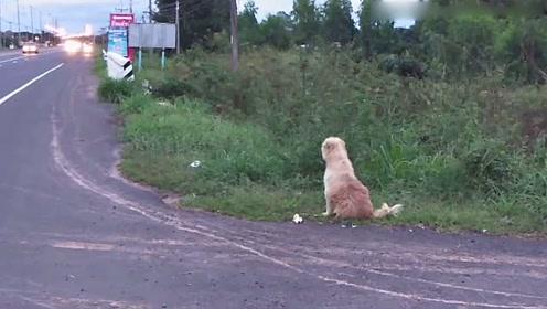 感人 小狗与主人走散坐路边苦等四年