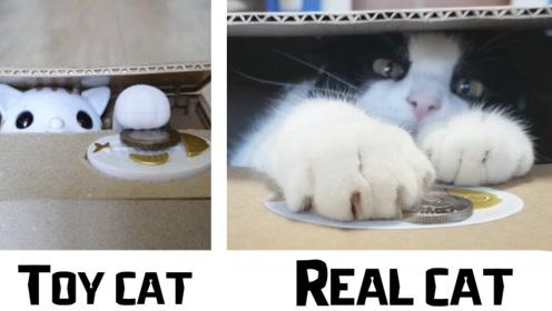 老外用自家猫咪制作存钱罐,小猫能听话工作吗?网友:画面高萌!