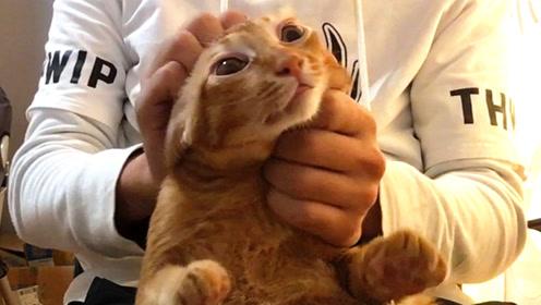 橘猫被人撸到上头,真令猫头秃!