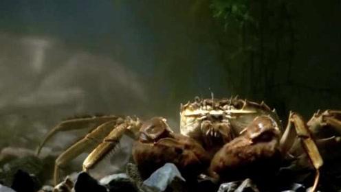 阳澄湖大闸蟹为什么好吃?专家:光蜕壳就18次,独有这片水土