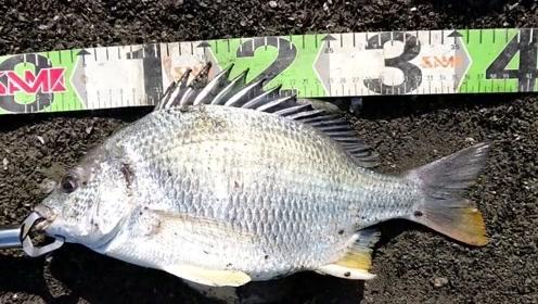 入海口钓鱼,一天收获两条记录鱼,没想到这里的鱼这么大