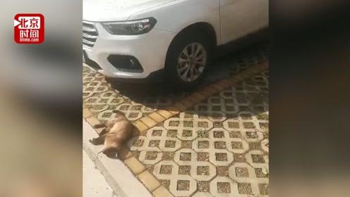 暹罗猫高空坠下砸碎新车天窗 车主贴告示寻找猫主索赔