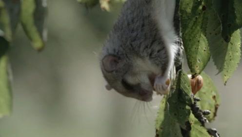 世界上最能睡的动物,3年时间2年都在睡觉,睡着睡着就饿死了