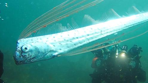发现一条罕见带鱼,这杀马特造型还是头一回见!