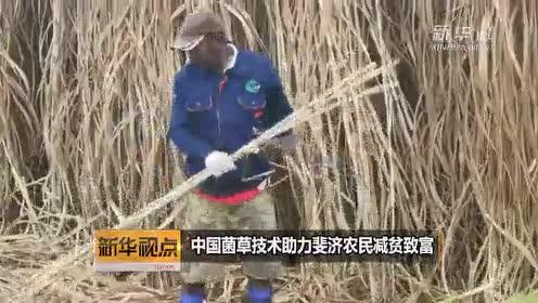 中国菌草技术助力斐济农民减贫致富