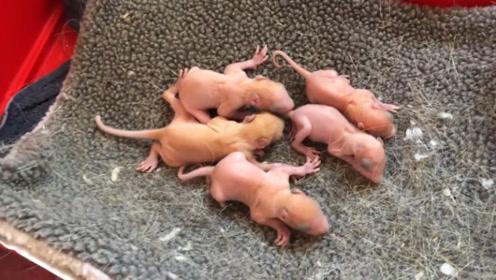 """男子意外捡到一窝""""小松鼠"""",收养数月后,意想不到的事情发生了!"""