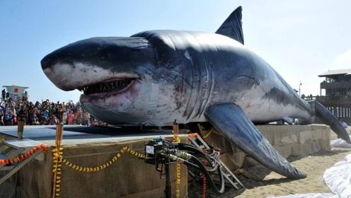 """街头出现一条""""巨鲨"""",近7米的高度,路人不怕纷纷靠近合影!"""
