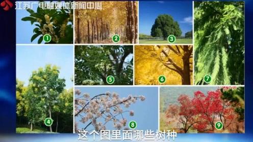 长江边种什么树最好?专家给出9种选择,最适合的居然是...|黄金时间