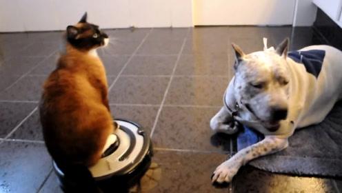 猫咪驾驶着吸尘器和狗打架,这神仙操作,把狗狗给整懵了!