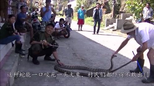 印尼男子赤膊上阵制服眼镜蛇,空手掰掉毒牙,村民看呆