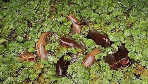 在这样的环境里养鱼,不会缺氧吗?