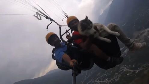 印度铲屎官带二哈体验高空跳伞,没想到狗子全程,比主人还淡定