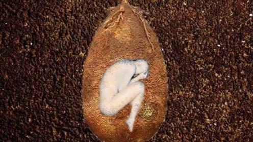 树根下面长着一颗巨蛋,里面藏着一个人,看完不淡定了!