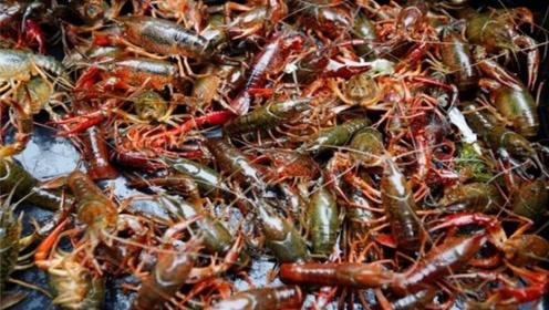 英国小龙虾泛滥,当地人苦不堪言,吃货:都送我们这来吧